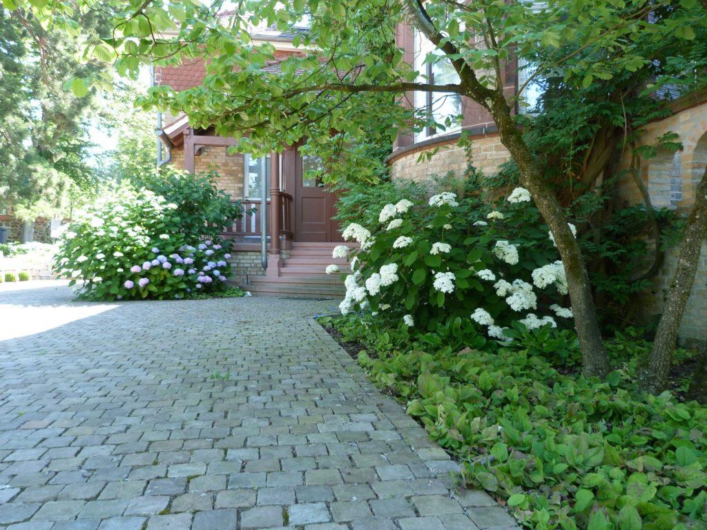 Baumann-GärtenFreiräume-Villengarten-Darmstadt-Eberstadt-Eingang-Hortensien 2