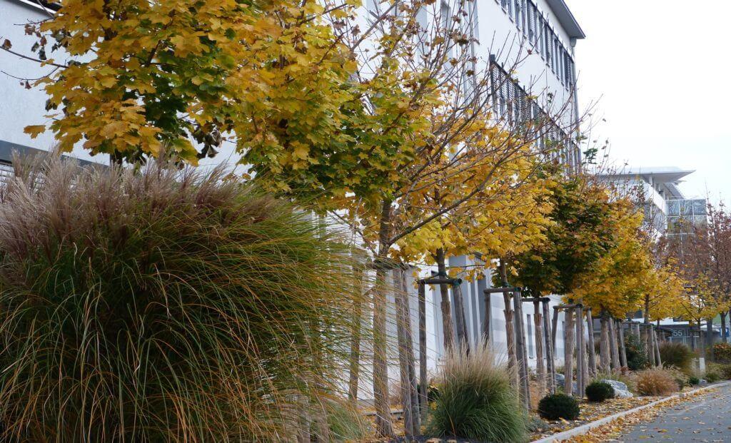 Schenk-Technologiepark-Aussenanlage-Businessgarten-Baumann-Header