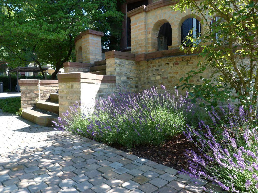 Villengarten-Darmstadt-Eberstadt-Eingang-Lavendel-Baumann-GärtenFreiräume