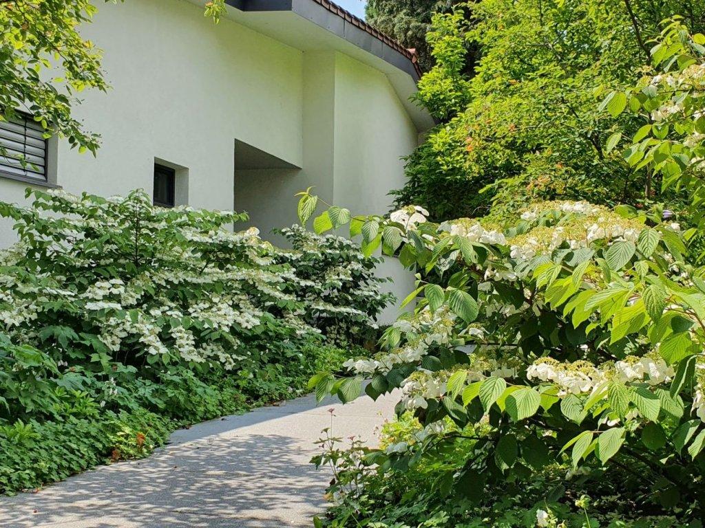 Grün Eingangsbereich 4zu3